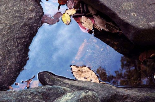 Leaves_in_water_with_rocks